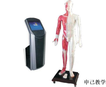 19寸多媒体人体针灸穴位交互数字平台 型号:SJ/WST19M