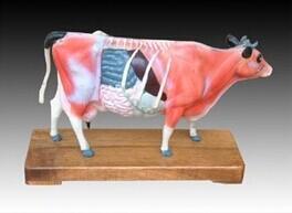 牛体针灸穴位模型 型号:SJ/4003
