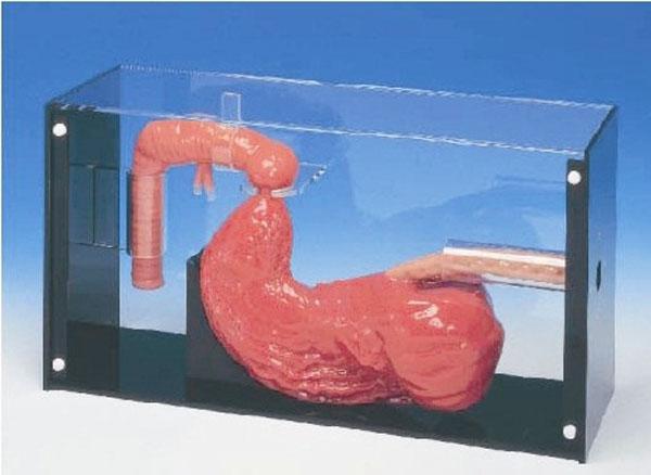 胃镜与ERCP检查训练模型 型号:SJ/LV43