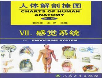 人体解剖模型-感觉系统(12张)型号:纸制