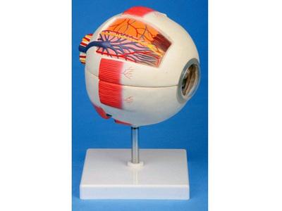 眼球放大带支架模型 型号:SJ/117102