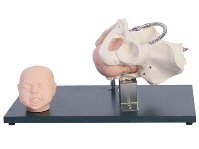 带有胎儿头的骨盆模型 SJ/F23