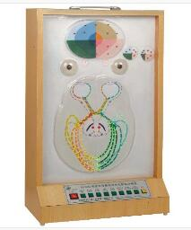 瞳孔对光反射电动模型 型号:SJ/117109