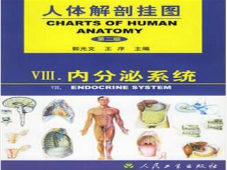 人体解剖挂图-内分泌系统(4张)型号:纸制