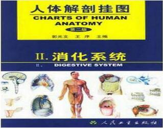 人体解剖挂图-消化系统(25张)型号:纸制