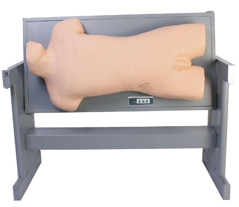 肝脓肿穿刺与胸腔穿刺训练模型型号:SJ/CK819