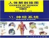 人体解剖挂图-神经系统(45张)型号:纸制