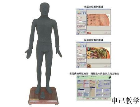 多媒体按摩点穴电子人体模型 型号:SJ/MAW170A