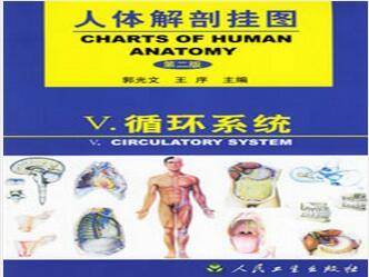 人体解剖挂图-循环系统(26张)型号:纸制