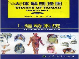人体解剖挂图-运动系统(51张) 型号:纸制