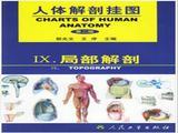 人体解剖挂图-局部解剖(64张)型号:纸制