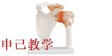 肩关节模型 型号:SJ/11209-1